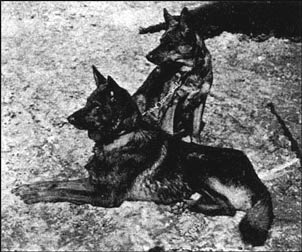 Horand & Mari - The first registered German Shepherd Dogs