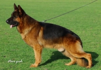 Martin-Haus GSDs