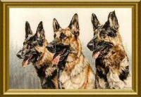Todorhaus German Shepherds